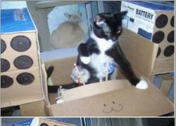 Enlace a Los gatos han empezado a darle un uso más bélico a las cajas de cartón