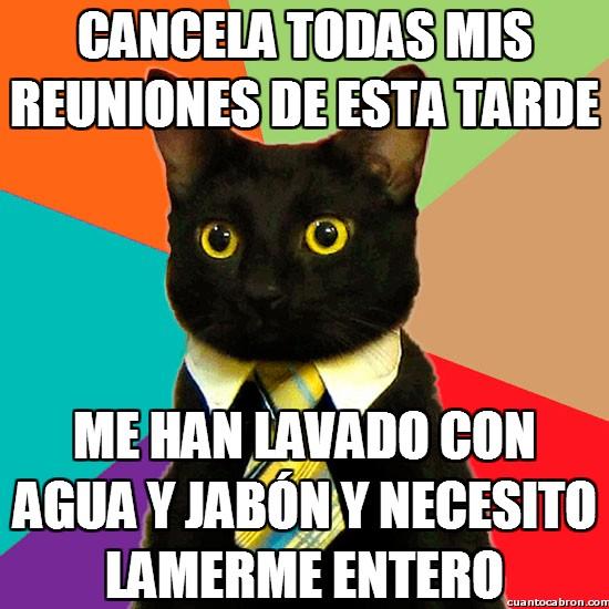 Gato_empresario - Cancela todas mis reuniones de esta tarde