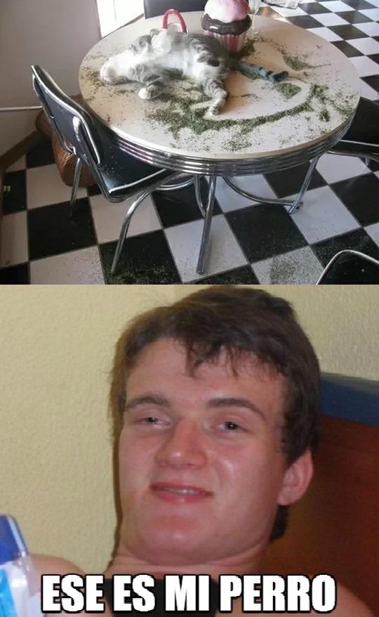 Colega_fumado - ¡Ese es mi perro!