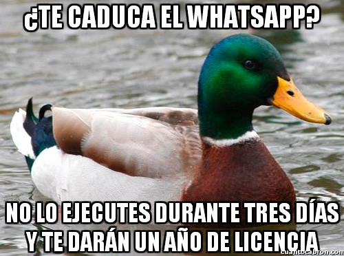 Pato_consejero - La solución a la caducidad de Whatsapp