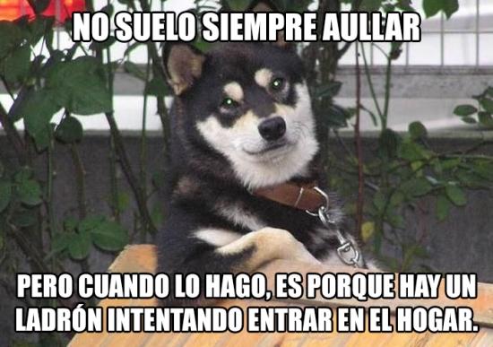 Meme_otros - Hazle caso, es el perro más interesante del mundo