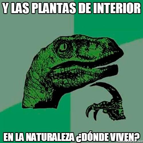 Philosoraptor - Y las plantas de interior...