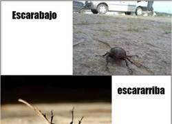 Enlace a Escarabajo / Escararriba
