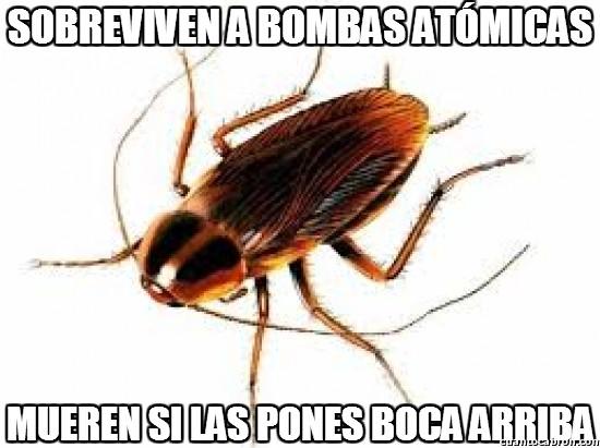 Meme_otros - Sobreviven a bombas atómicas