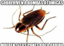 Enlace a Sobreviven a bombas atómicas