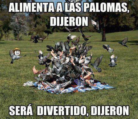 Meme_otros - Alimentar las palomas es un peligro