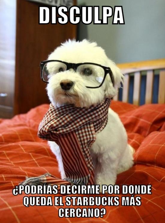 gafas,hipster,perro,starbucks