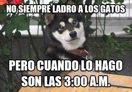 3 de la mañana,gatos,ladrar,mas interesante del planeta,perro