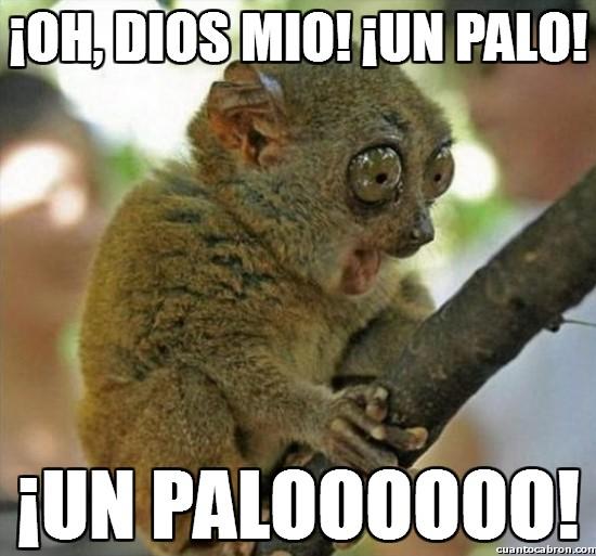 Meme_otros - ¡Oh, dios mio! ¡Un palo!
