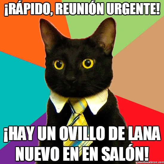Gato_empresario - ¡Rápido, reunión urgente!