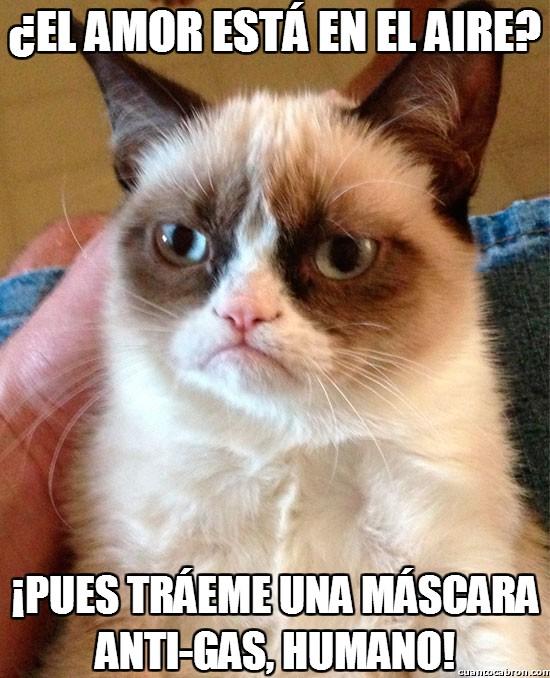 Grumpy_cat - ¿El amor está en el aire?