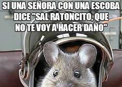 Enlace a El compañero roedor de Ackbar
