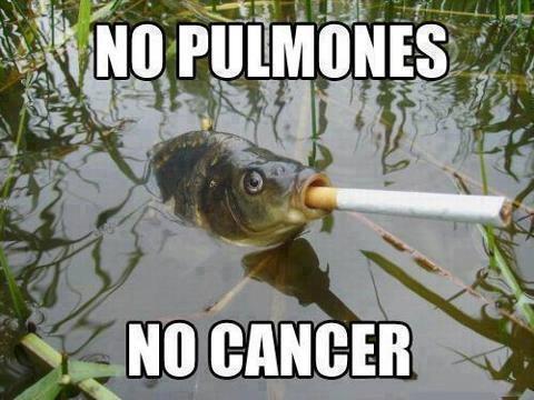Meme_otros - Peces que viven al límite