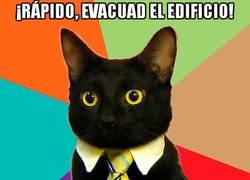 Enlace a El gato ejecutivo solicita la evacuación del edificio
