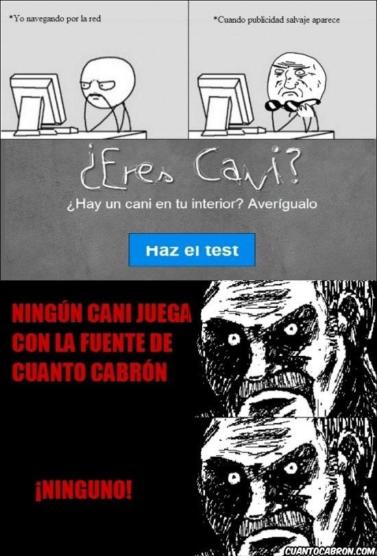 Mirada_fija - Los canis también saben plagiar