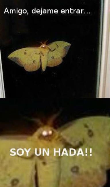 bicho,dejar entrar,gigante,hada,insecto,mariposa,miedo,ventana