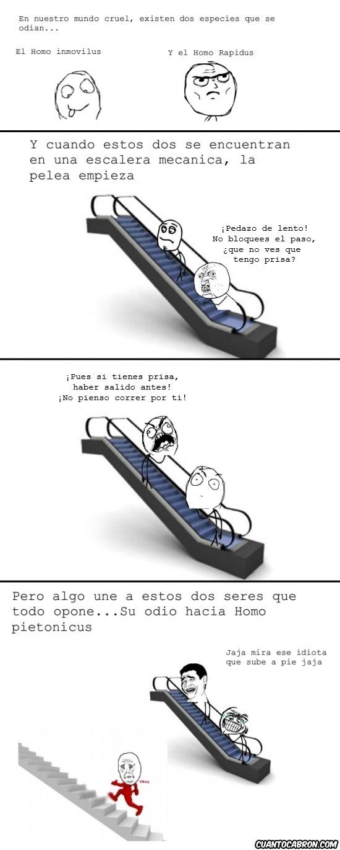 Yao - Escaleras mecánicas