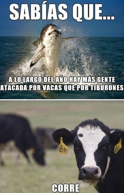 atacar,correr,estadisticas,miedo,personas,terror,tiburones,vaca asesina,vacas,victimas