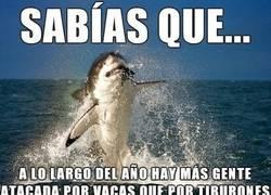 Enlace a Los tiburones no son tan peligrosos como...