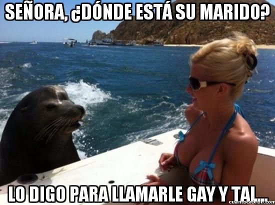Meme_otros - ¡La foca homófoba es real!
