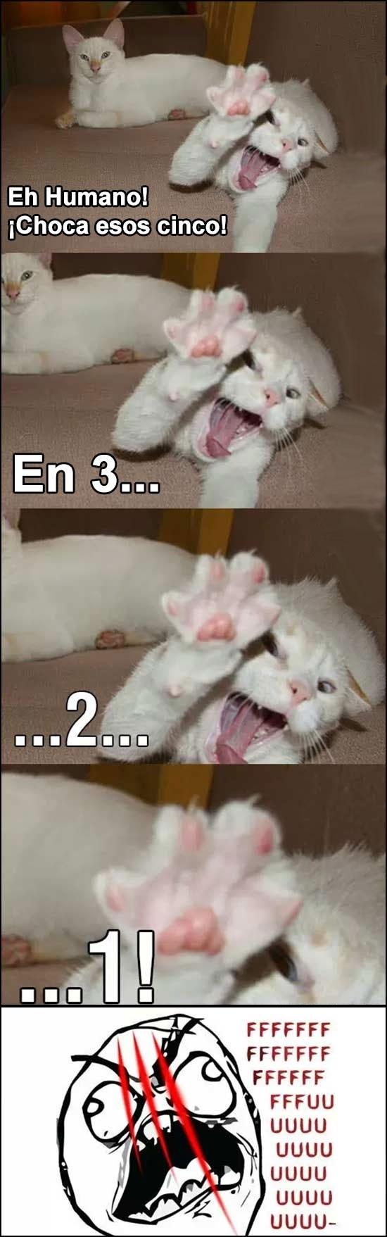 Ffffuuuuuuuuuu - El riesgo de chocar los cinco con un gato