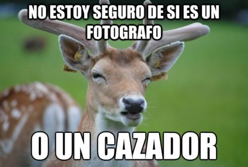 Cazador,ciervo,fotografo,ojos entornados,suspicious fry