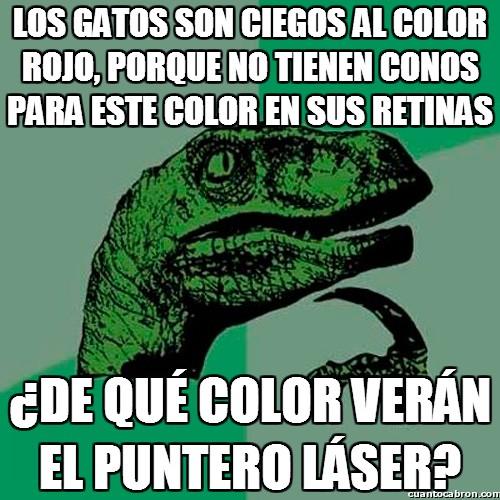 ciego,color,Gato,láser,no poder ver,puntero,retinas,rojo