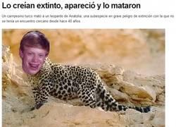 Enlace a Bad luck leopardo de Anatolia