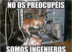Enlace a No te puedes fiar de los gatos ingenieros