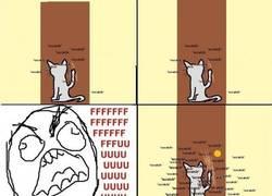 Enlace a Si hay un animal más troll que un gato, yo no lo he visto
