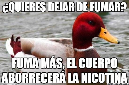 Pato_mal_consejero - Este pato es muy sabio