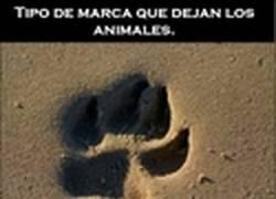 Enlace a Diferencias entre la marca que dejan los animales y los humanos en el planeta