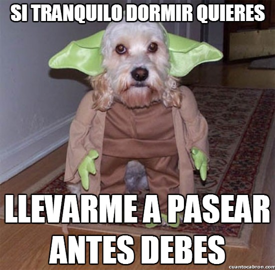 Meme_otros - ¡Obedece al PerroYoda!