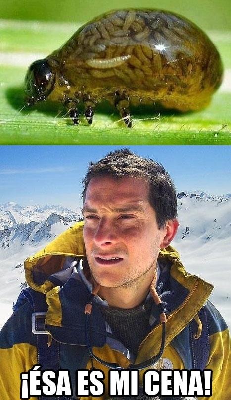 Bear Grylls,bicho lleno de más bichos,bichoception,cena,comida,gusanos,pulga