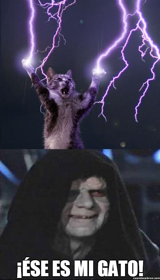 Meme_otros - El gato que todo Lord Sith querría