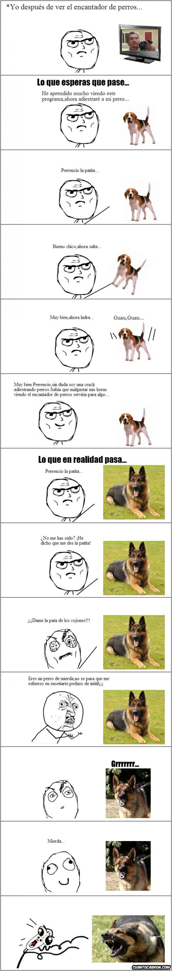Omg_run - Mi futuro como encantador de perros