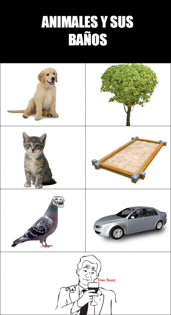 animales,arbol,arena,auto,baños,cagada,gato,hombro,paloma,perro,true story