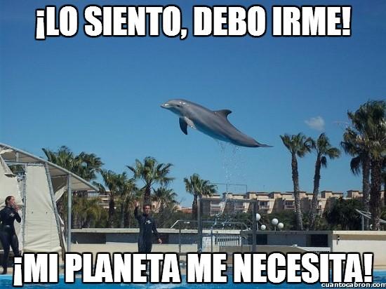 Meme_otros - Delfinor del planeta cetaceus