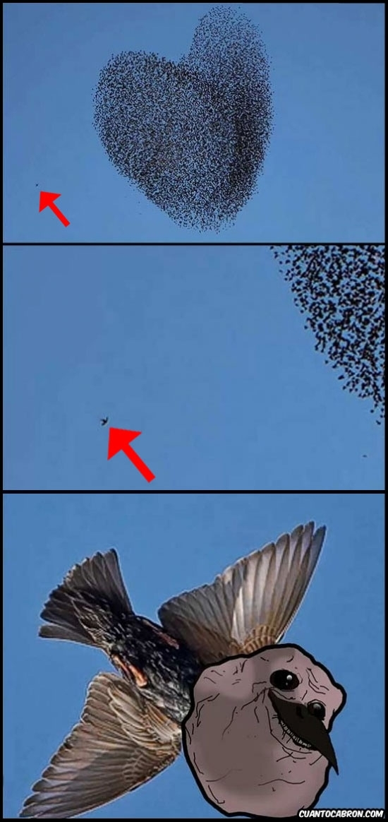 Forever_alone - [Tema de la semana] Las aves también sufren en San Valentín