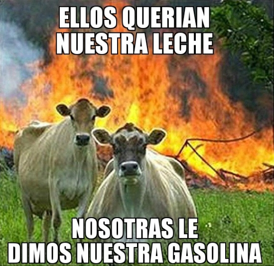 Meme_otros - Las vacas asesinas