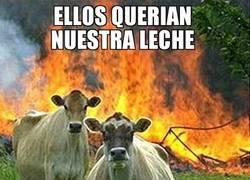 Enlace a Las vacas asesinas