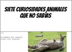 Enlace a Curiosidades animales