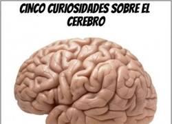Enlace a Curiosidades sobre el cerebro