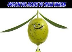 Enlace a Origen del aceite de oliva virgen