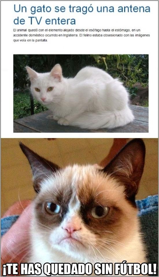 Grumpy_cat - Esto te pasa por no prestarme atención