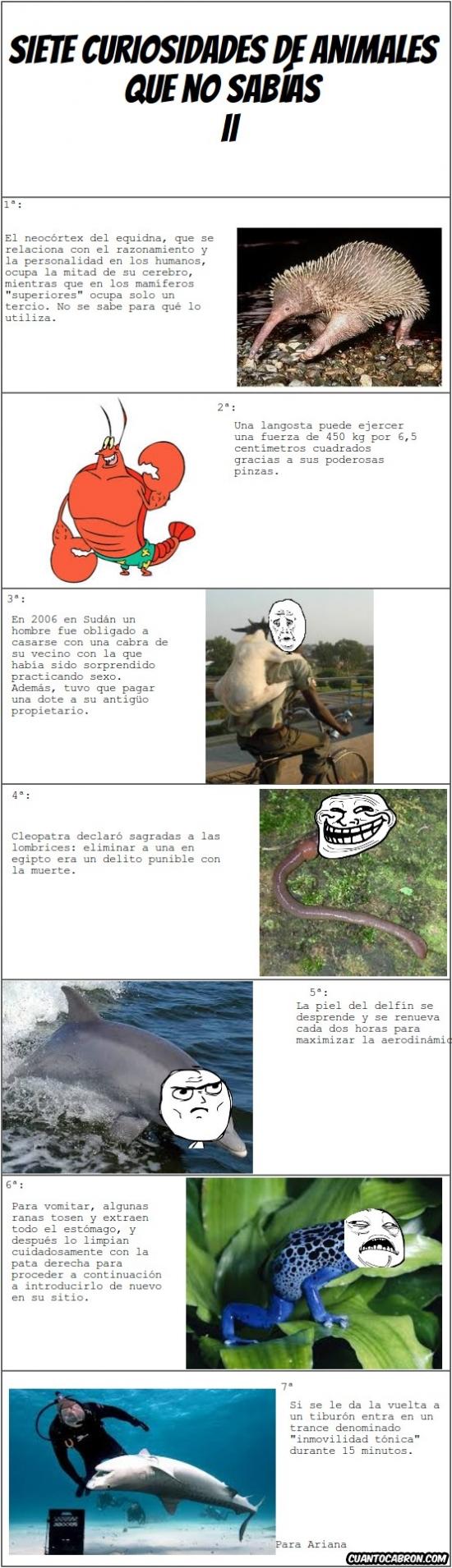 Otros - Curiosidades animales II