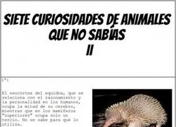 Enlace a Curiosidades animales II