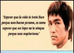 Enlace a Bruce Lee siempre tenía razón
