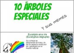 Enlace a 10 árboles especiales y sus memes