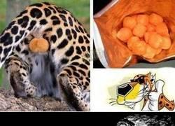 Enlace a ¿Nunca te has preguntado por qué los Cheetos son de color naranja?